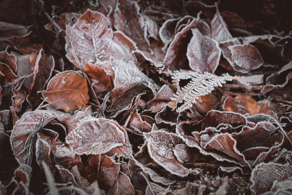 image of frost-covered leaves on the ground