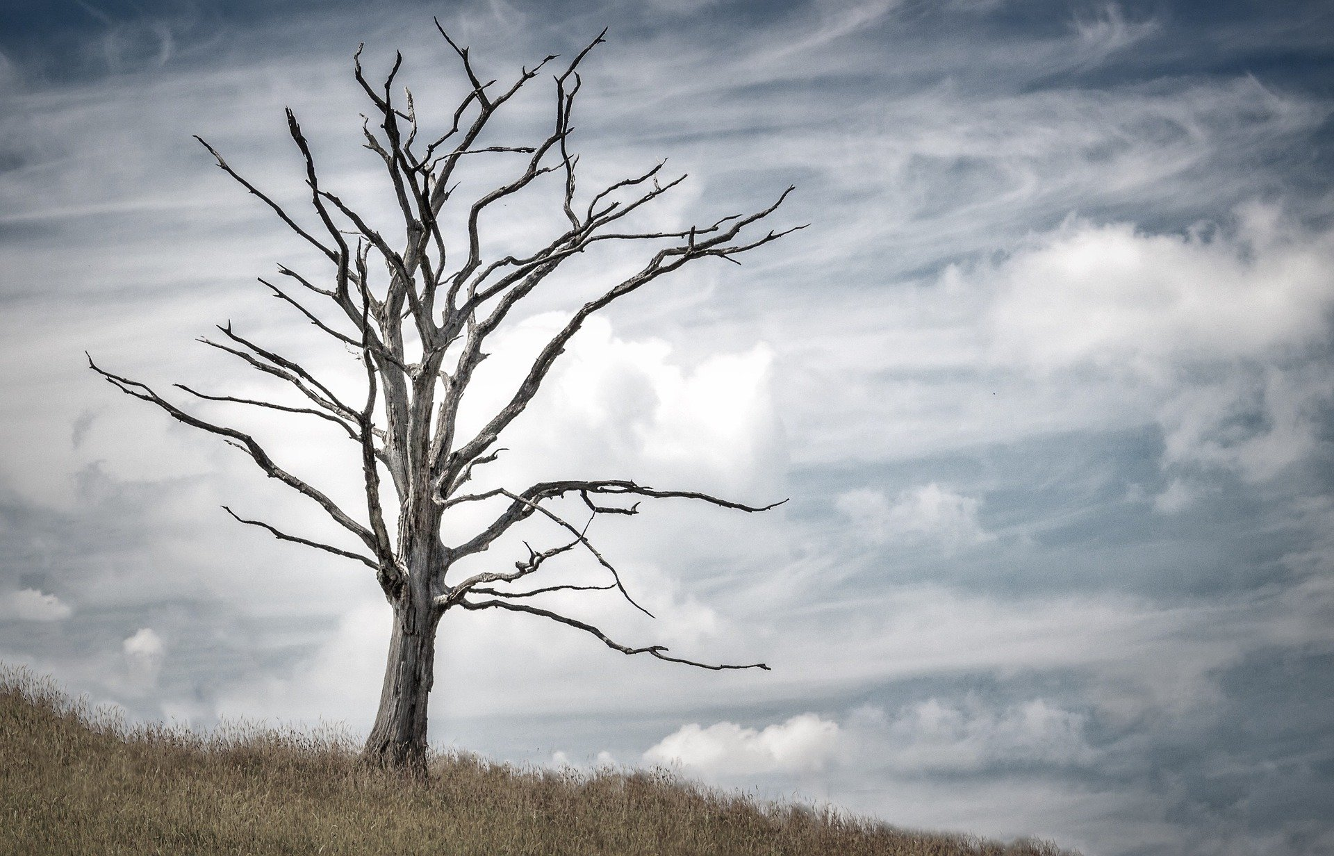 image of dead tree in meadow